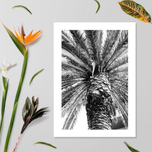 Plakat z palmą do sypialni