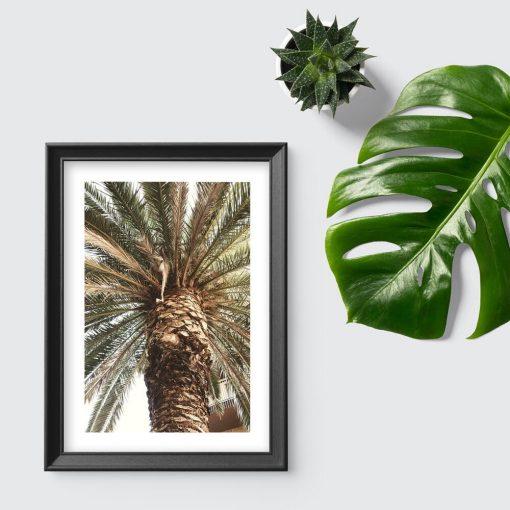 Plakat do sypialni - Motyw egzotycznej palmy