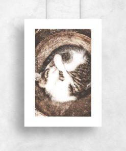 Plakat z kotem w koszyku