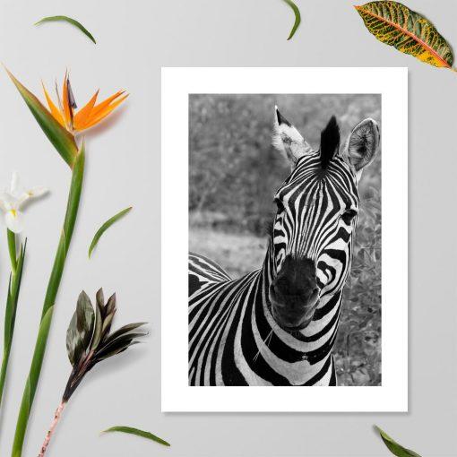 Plakat z zebrą pręgowaną do salonu