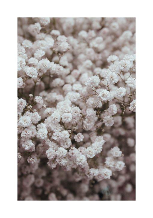 Plakat - Kwiatki