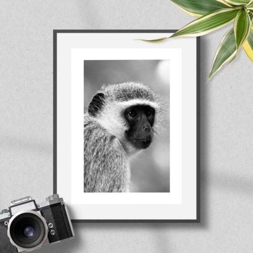Plakat z małpą do sypialni