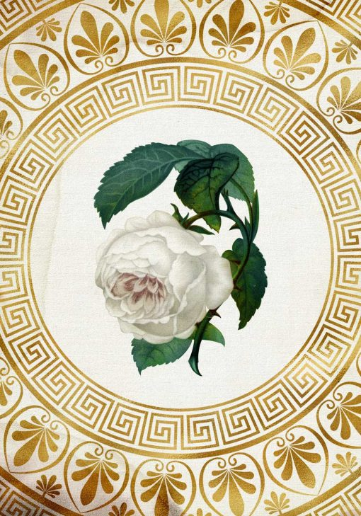 Plakat - Biała róża