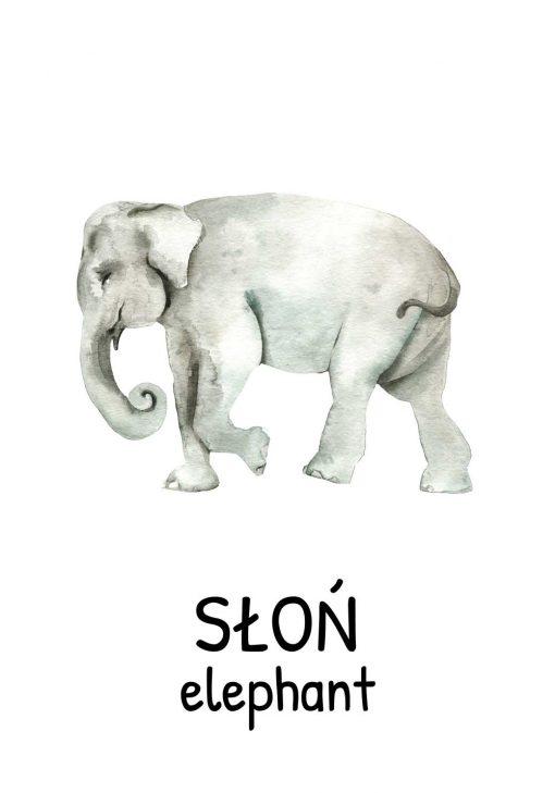 Plakat edukacyjny ze słoniem