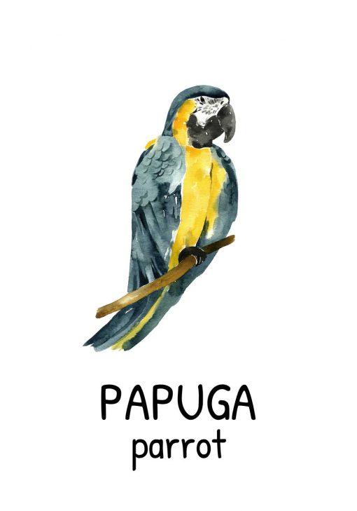 Plakat dziecięcego - Papuga