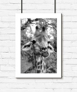 Plakat z żyrafą wśród drzew