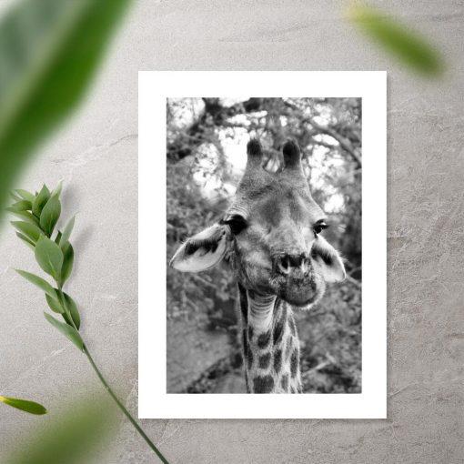 Plakat żyrafa na tle akacji