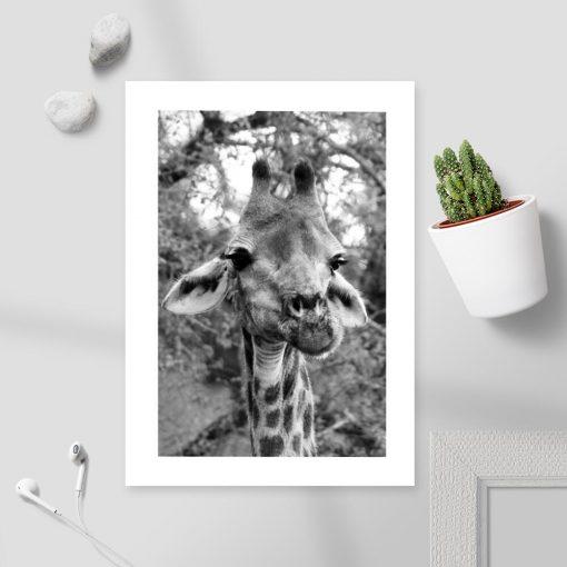 Plakat z motywem żyrafy na tle akacji