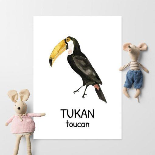 Plakat edukacyjny - Tukan dla chłopca