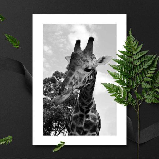 Plakat do oprawienia z żyrafą