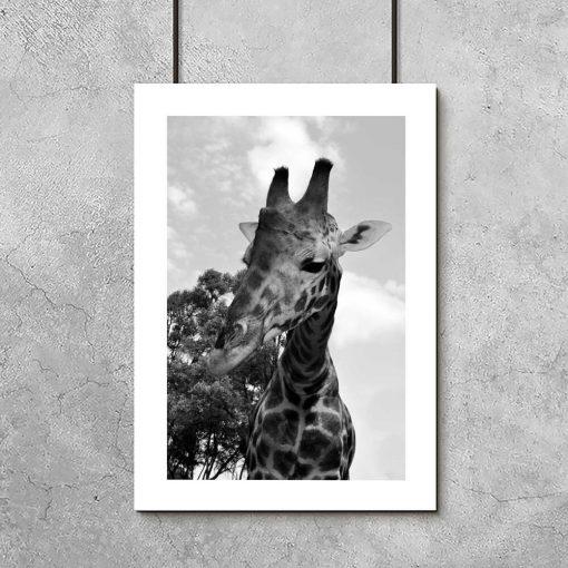 Plakaty do przedszkola z żyrafą