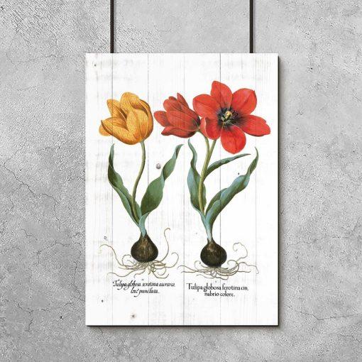 Plakat z tulipanami do salonu
