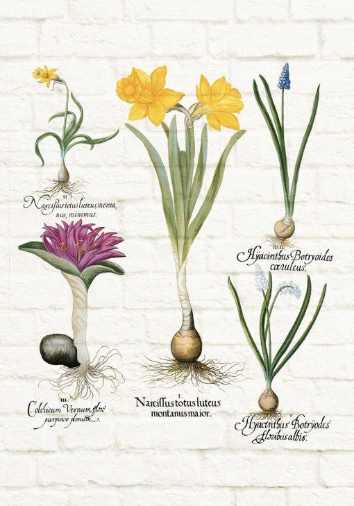 Barwny plakat z motywem wiosennych kwiatków do kuchni