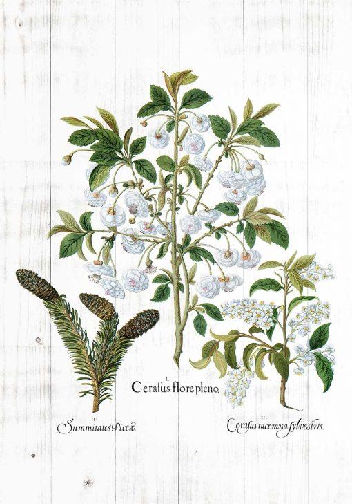 Botaniczny plakat - Kwiaty na deskach do jadalni