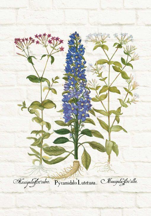 Botaniczny plakat z kolorowymi polnymi kwiatuszkami do jadalni