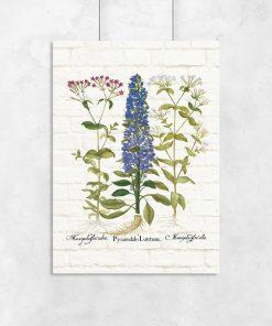 Botaniczny plakat z kolorowymi polnymi kwiatuszkami do przedpokoju
