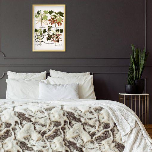 Botaniczny plakat z odmianami porzeczki do sypialni