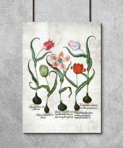 Botaniczny plakat z tulipanem do przedpokoju