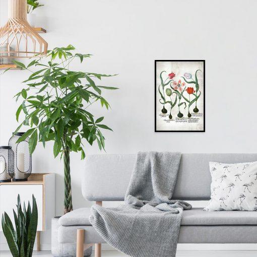 Botaniczny plakat z tulipanem do salonu