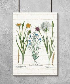 Botaniczny plakat z żółtą salsefią na prezent