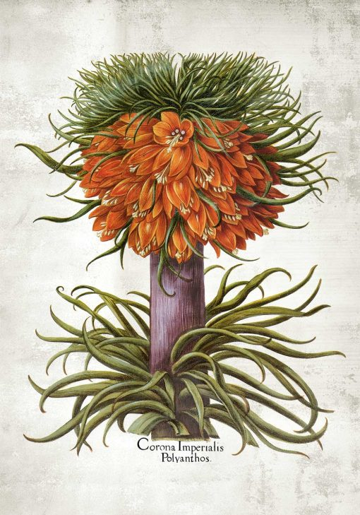 Cesarska korona - Plakat dla florysty do jadalni