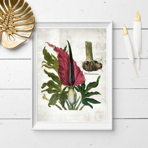 Edukacyjny plakat z motywem roślinnym