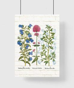 Edukacyjny plakat z niebieskim dzwonkiem ogrodowymdo gabinetu
