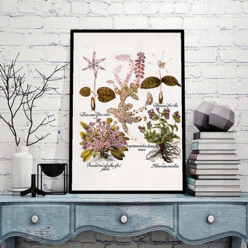 Fioletowe prymulki - Plakat botaniczny do gabinetu