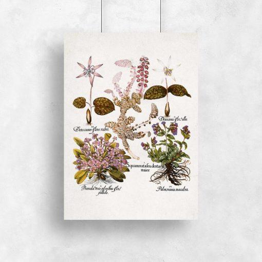 Fioletowe prymulki - Plakat botaniczny do kuchni