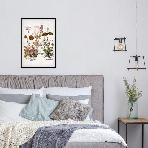 Fioletowe prymulki - Plakat botaniczny do sypialni