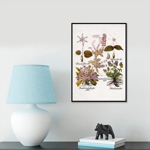 Fioletowe prymulki - Plakat botaniczny na przedpokój