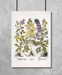 Fioletowo-niebieski mordownik - Plakat botaniczny do biura