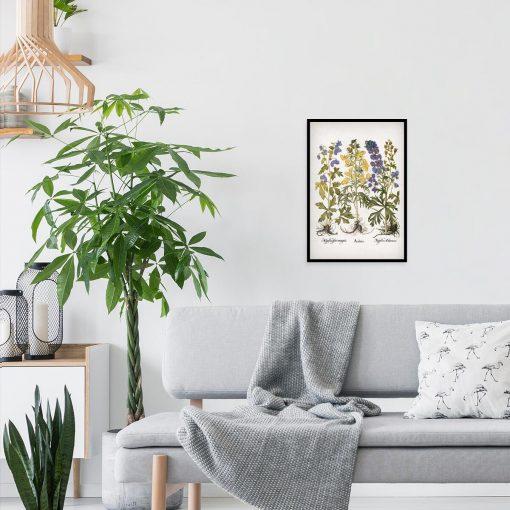 Fioletowo-niebieski mordownik - Plakat botaniczny do salonu