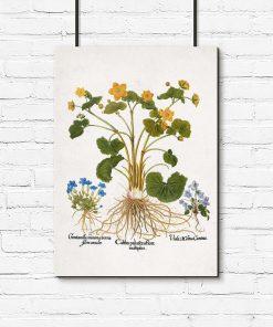 Plakat botaniczny - Łąkowe kwiaty do gabinetu