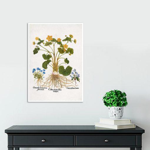 Plakat botaniczny - Łąkowe kwiaty na przedpokój