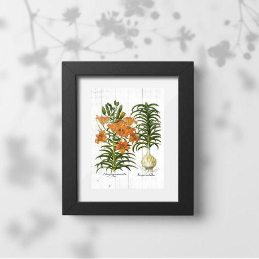 Plakat botaniczny z kwiatami