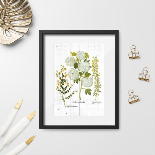 Plakat botaniczny z kwitnącymi roślinami