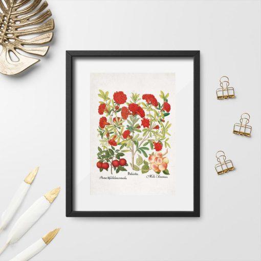Plakat czerwone kwiaty i owoce do powieszenia w sklepi
