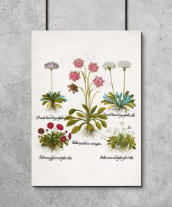 Plakat dla florysty - Czerwona stokrotka do jadalni