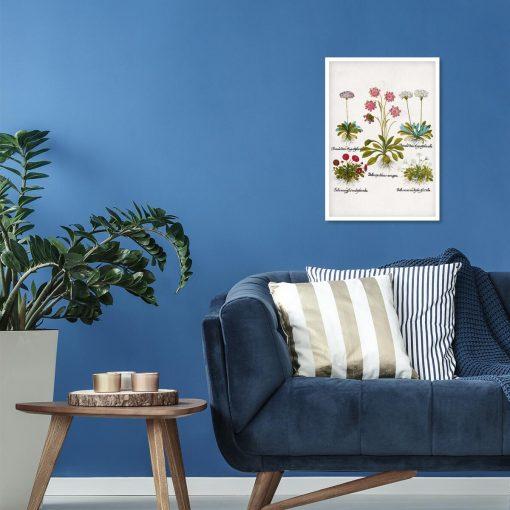Plakat dla florysty - Czerwona stokrotka do sypialni