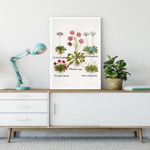 Plakat dla florysty - Czerwona stokrotka na przedpokój