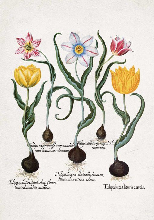 Plakat dla miłośnika kwiatów z tulipanami do jadalni