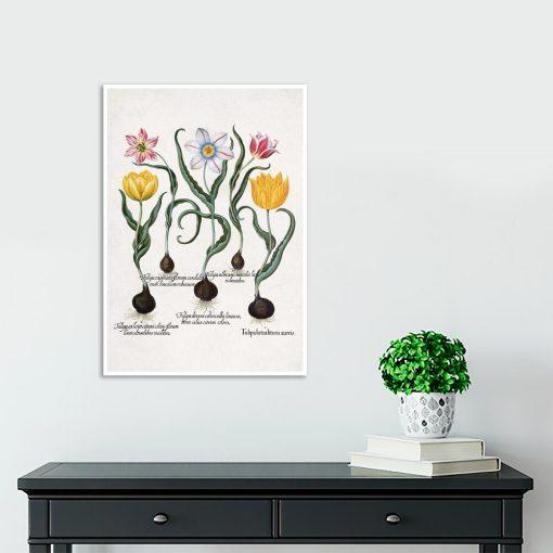 Plakat dla miłośnika kwiatów z tulipanami na przedpokój