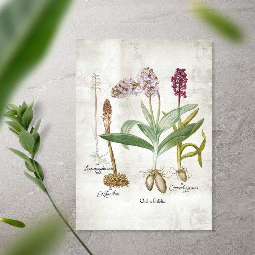 Plakat dydaktyczny z gatunkami storczyków