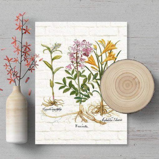 Plakat dydaktyczny z roślinami do oprawienia