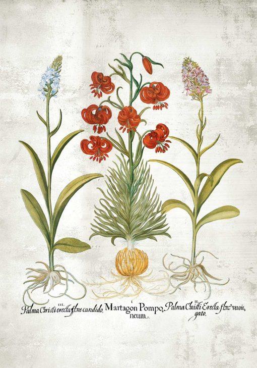 Plakat edukacyjny z kwiatami i ziołami