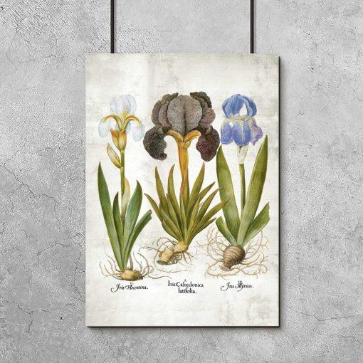Plakat edukacyjny z motywem kwiatów