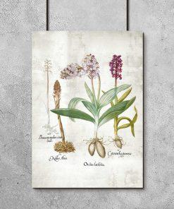 Plakat edukacyjny z roślinami z rodziny storczykowatych