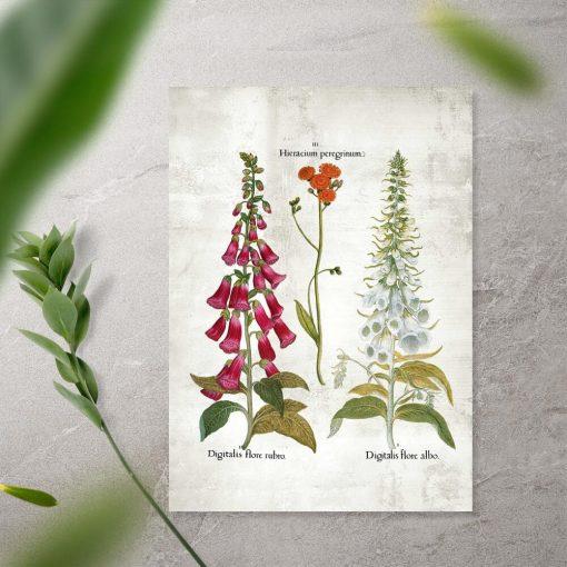 Plakat kwiaty ogrodowe w kolorach czerwieni i bieli