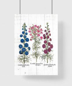 Plakat nowe gatunki roślin polnych